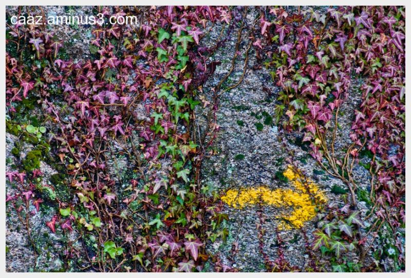 The colored sign arose on the rock framed by ivy