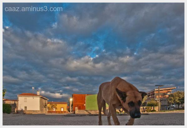 Vida de Perros 2 -  Dog's life 2