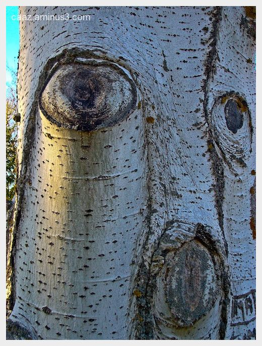 Dont be so sad, tree