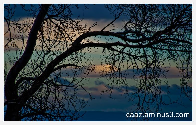 One tree silhouetted on the sunset sky of autumn