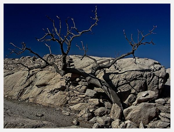 A dry tree surrounded by stones