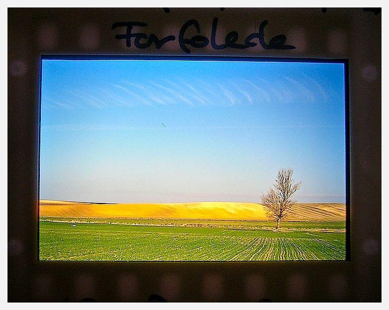 Digital capture of a old slide of Forfoleda field
