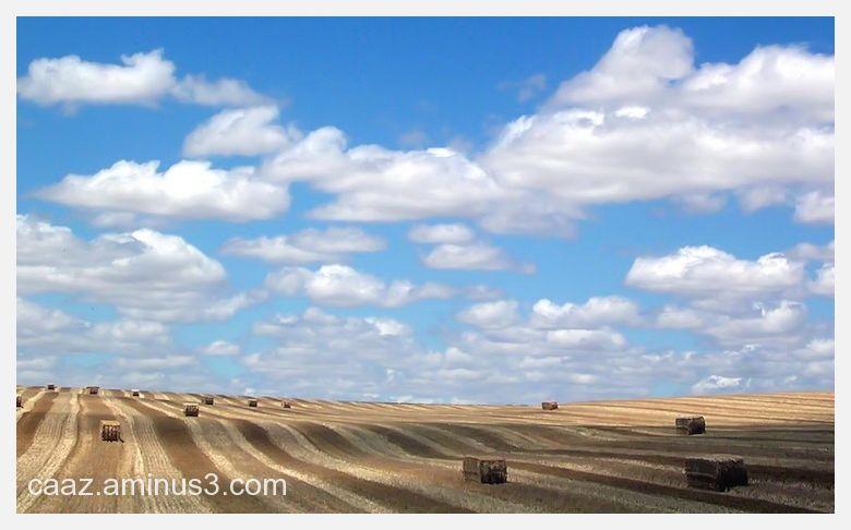 A summer view of Castilla fields
