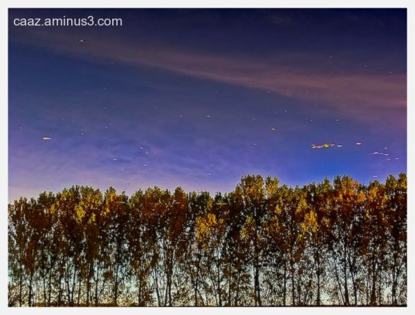Leaves floating in the sky