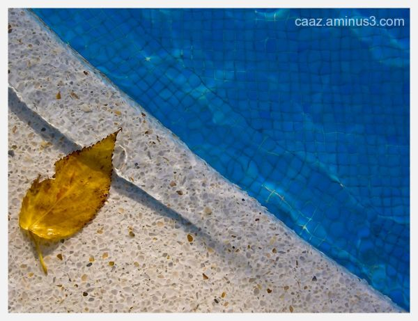 A yellow leaf on the border of a swimming pool