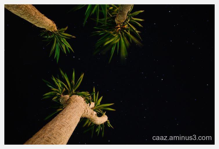 Palm trees against the sky plenty of stars