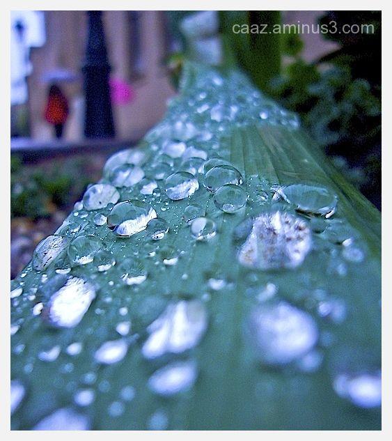drops rain in a leaf