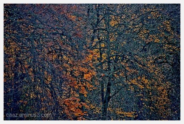 + autumn