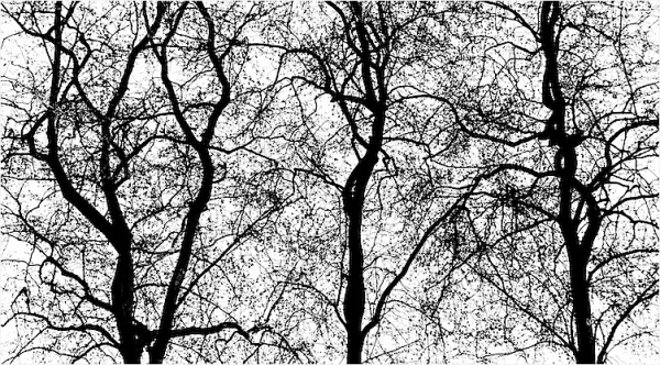 dendrites, blood vessels, trees ...?