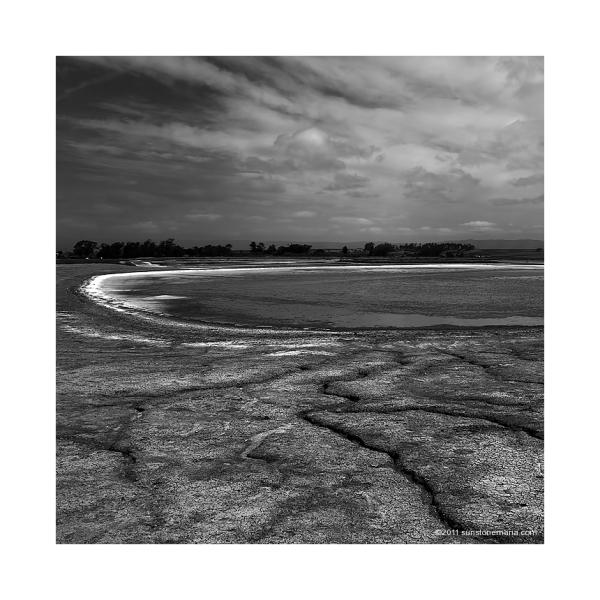 { the salt pond, elkhorn slough }