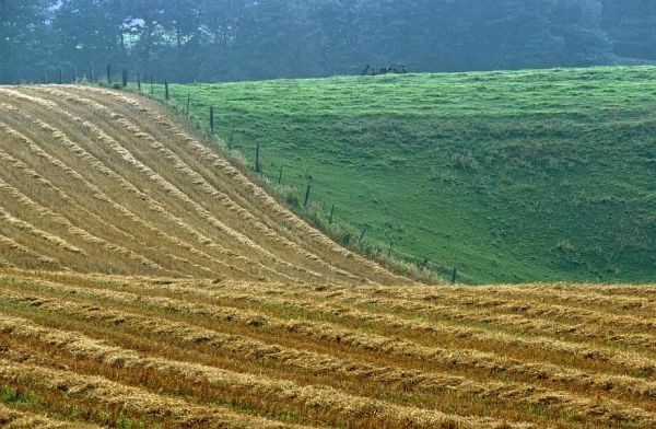Rural abstract of a furrowed field