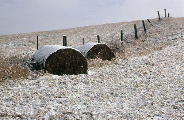 Rural hay bales covered in a blanket of snow