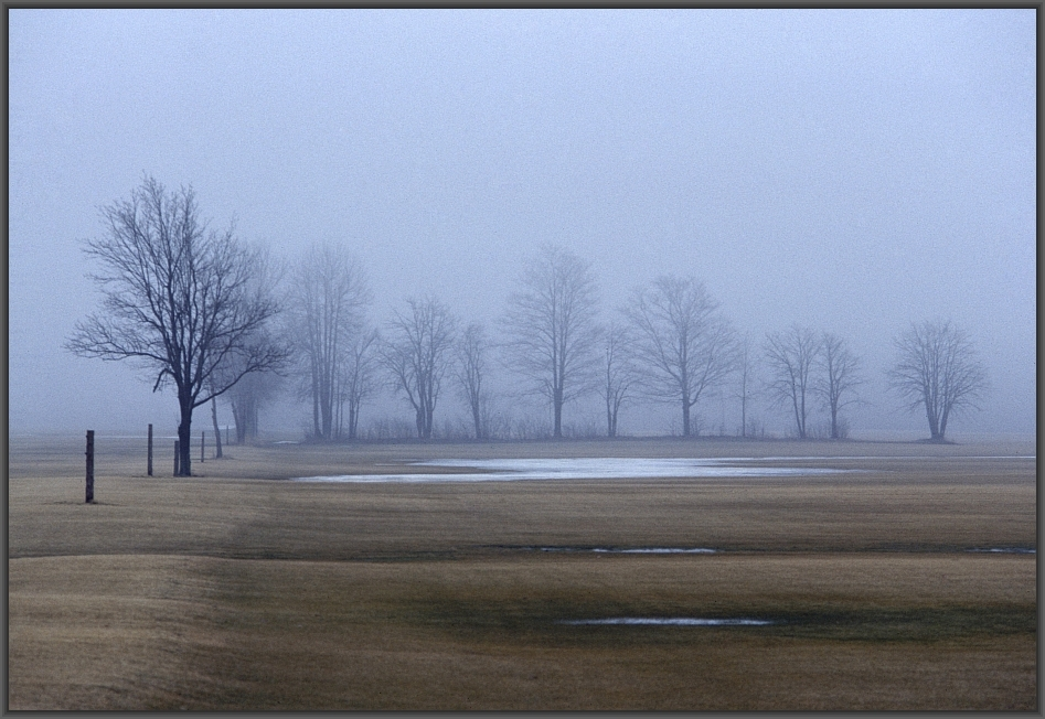A line of trees on a bleak late winter's day