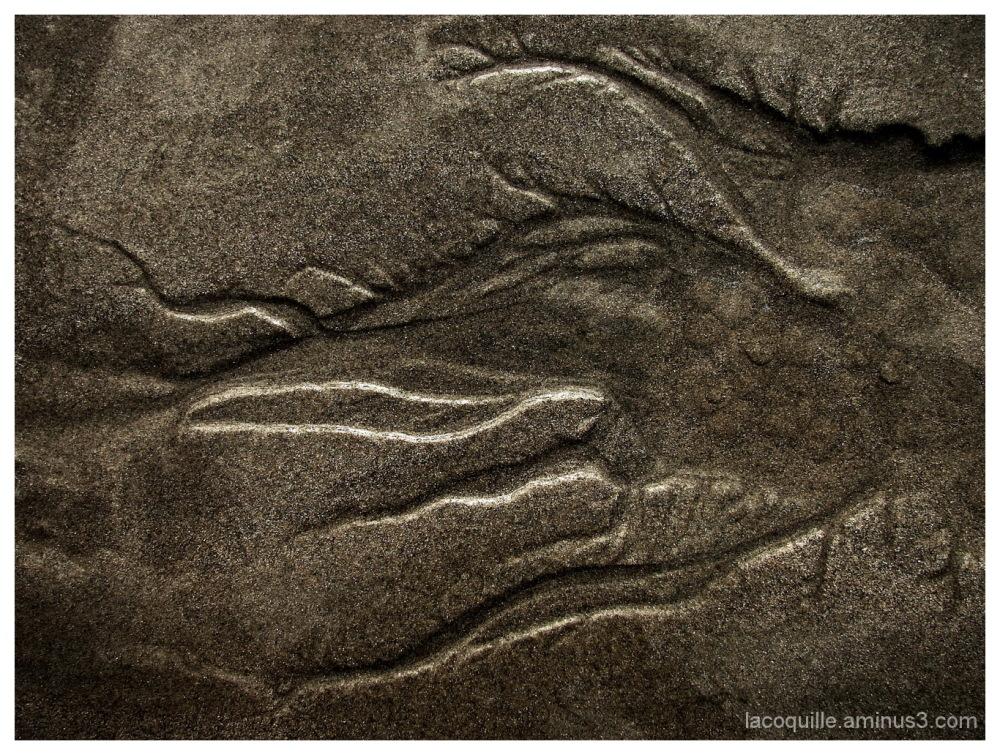 Monstre marin - Monster sea