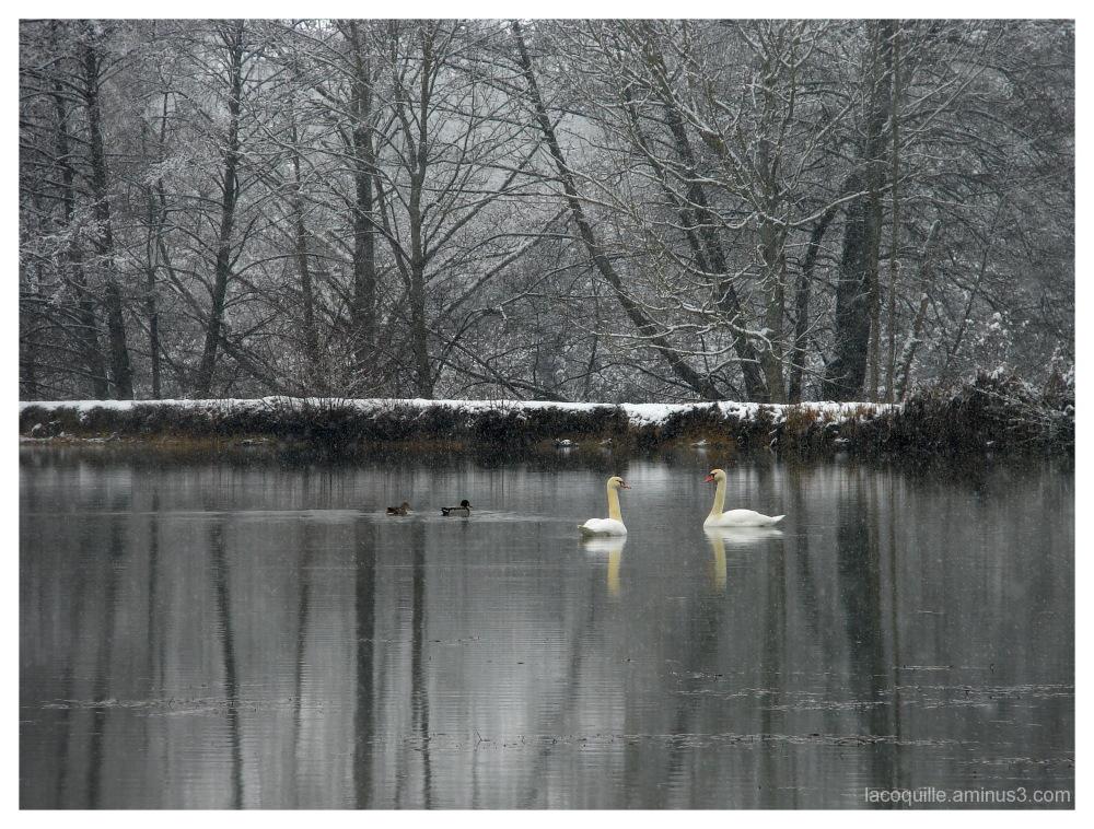 Le Lac des cygnes - Swan Lake