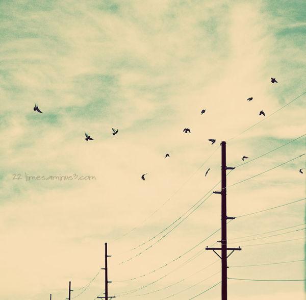 Birds, birds, birds......
