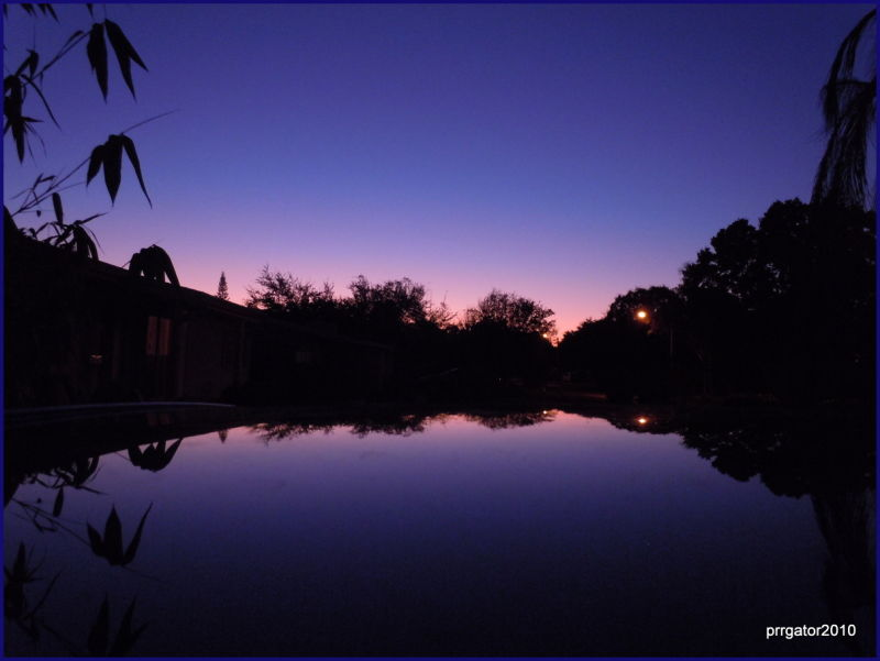 Bamboo Sunset