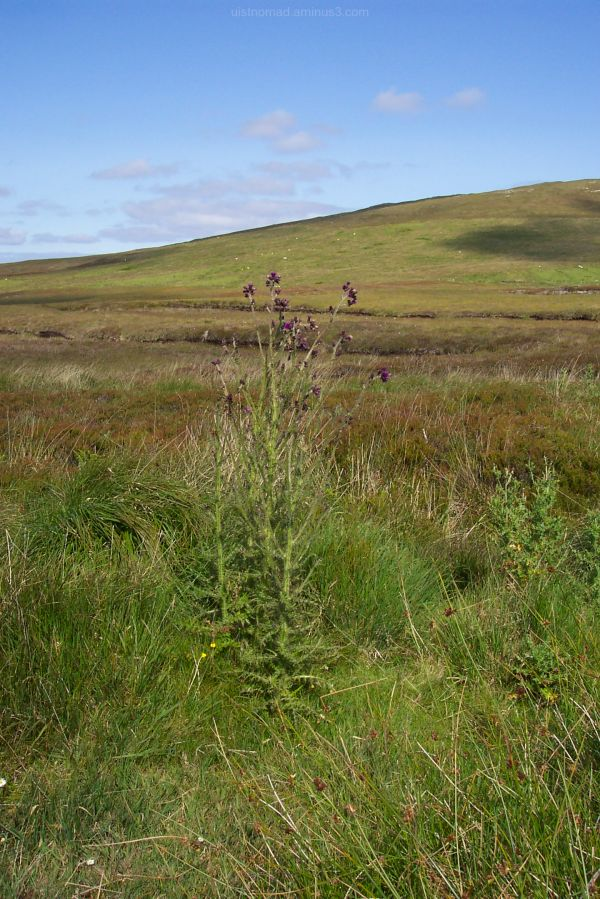 Even More Thistles