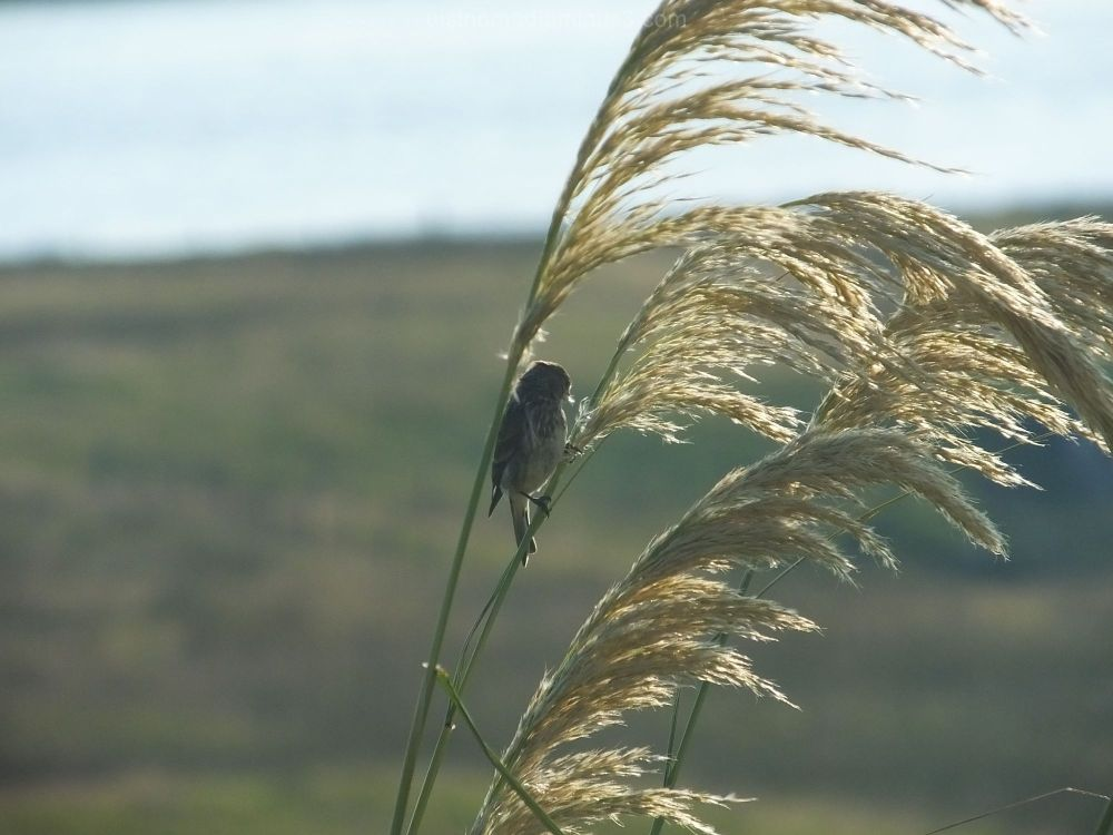 Pinching the Pampas Grass