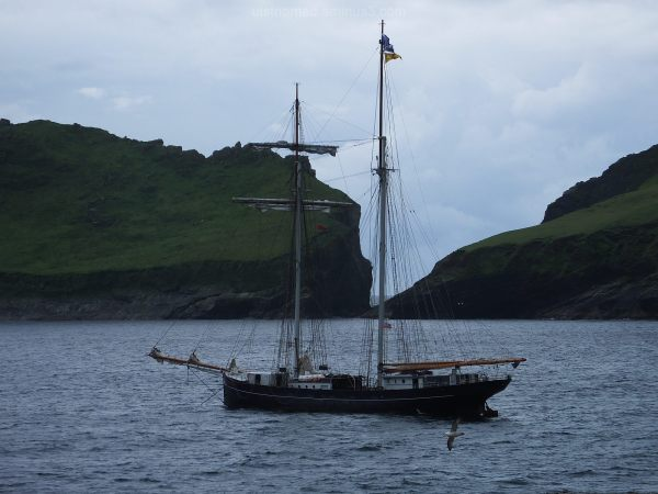 Visitor to St Kilda