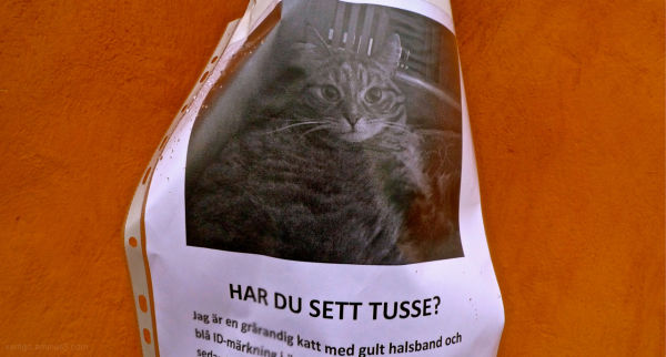 Lost cat over stockholm