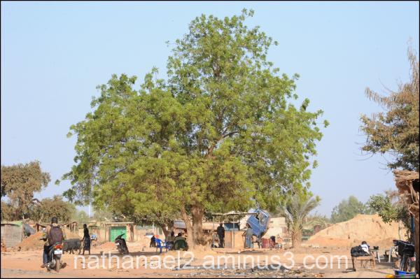 Tree of live...