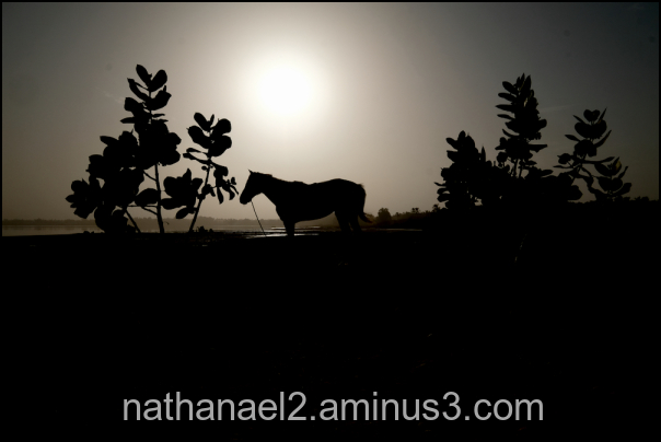 Night and horse...
