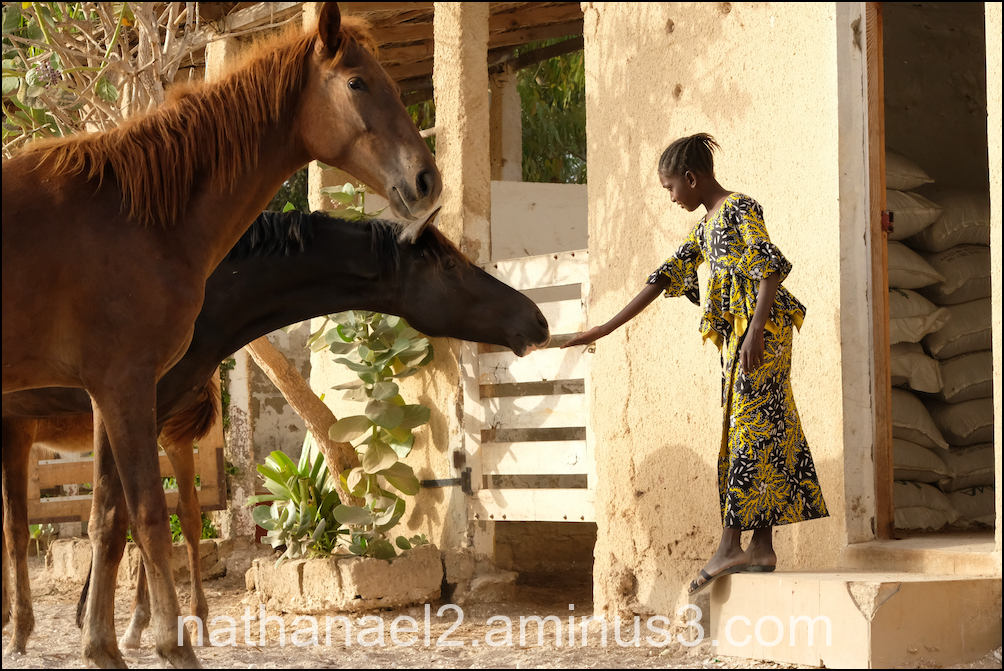 Love animal...