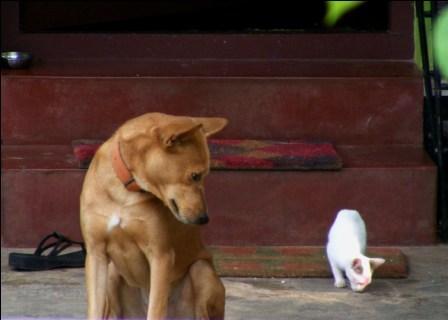 Sometimes friendship do happen between enemies...