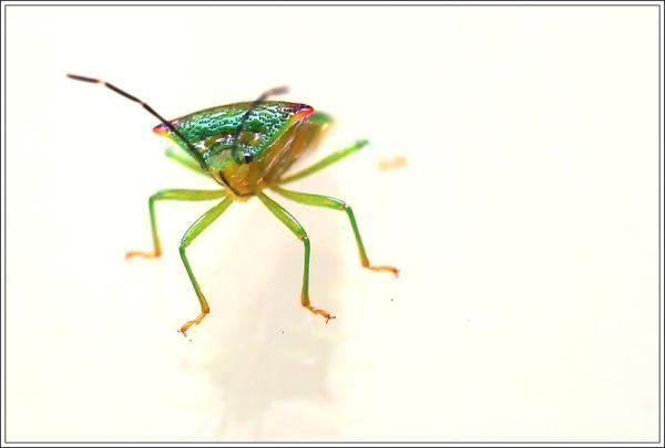 bug on a window pane