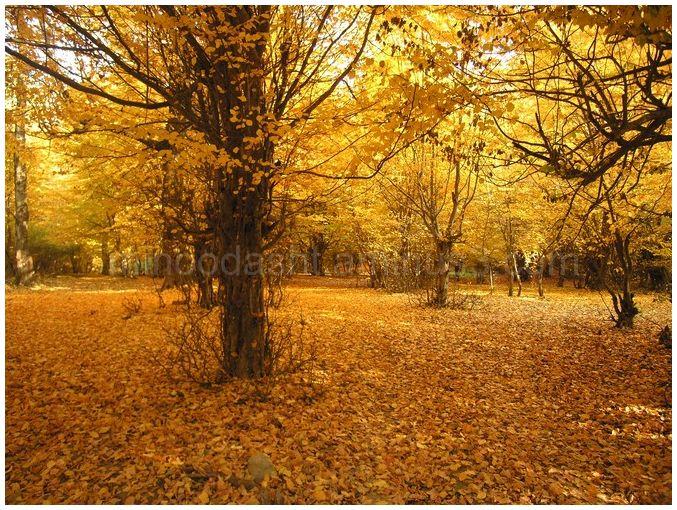 Minoodasht autumn