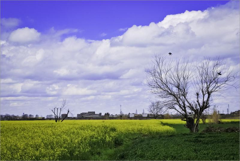 بهار 2