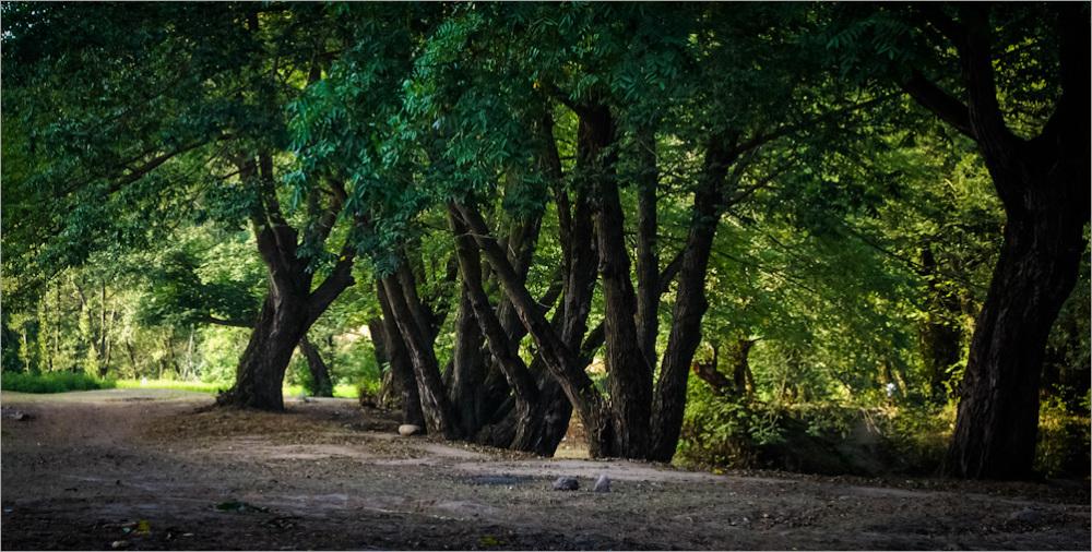 Minoodasht Nature 2014