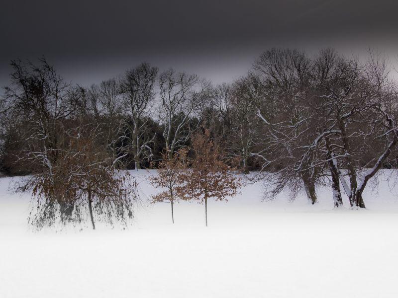 (winter trees) #6