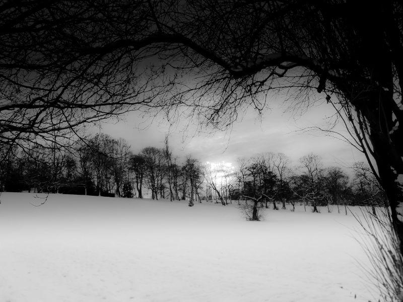 (winter trees) #3
