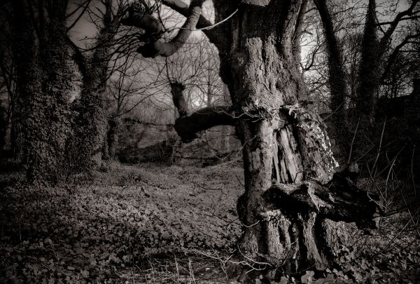 The Enchanted Forest  #1