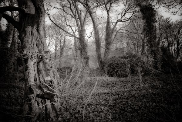 The Enchanted Forest  #2