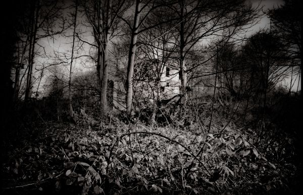The Enchanted Forest  #4
