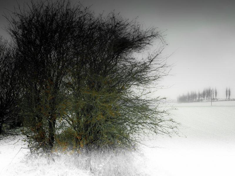 Winter Light  #1 (end of december 2010)