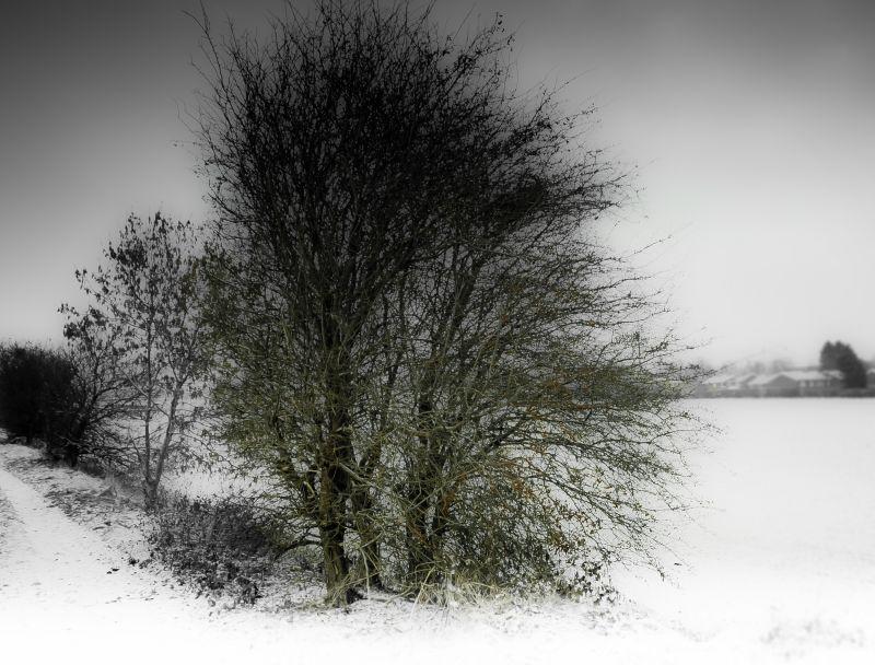 Winter Light  #3 (end of december 2010)