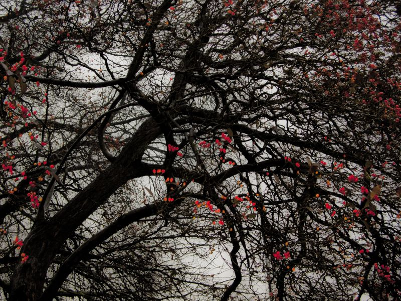 Branches (after Jackson Pollock)