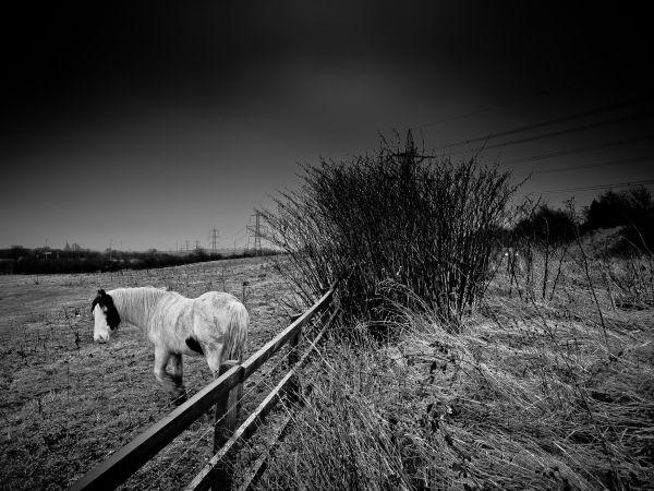 Equus caballus #3 of 3