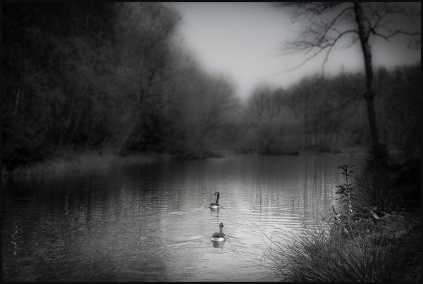 scenes from a riverside walk #2