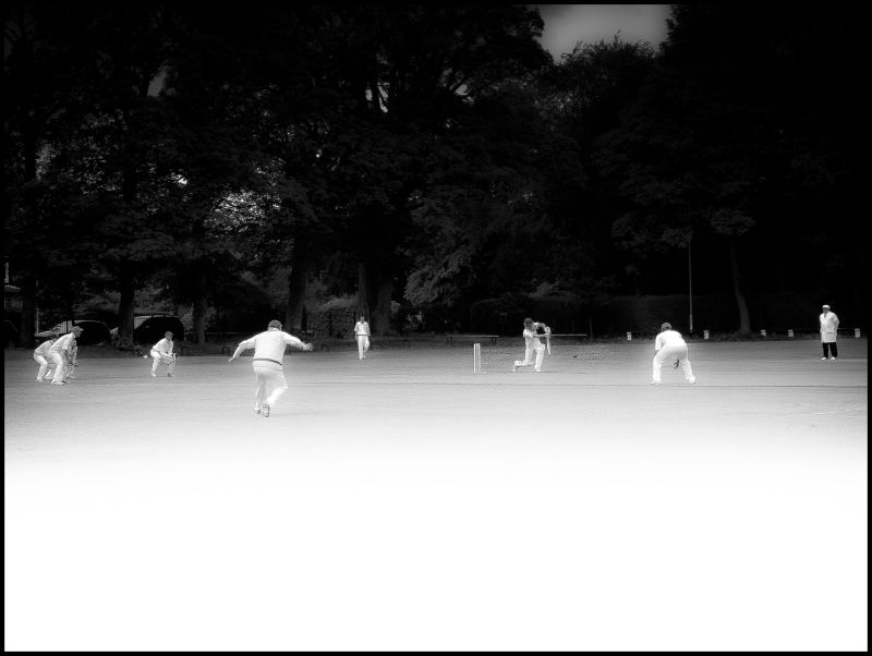 cricket, black and white
