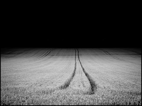 Tracks  through a wheat field