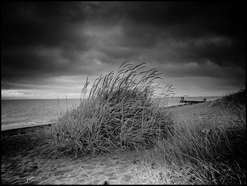 beach shrub
