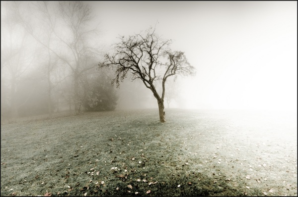 A foggy day in the park #7