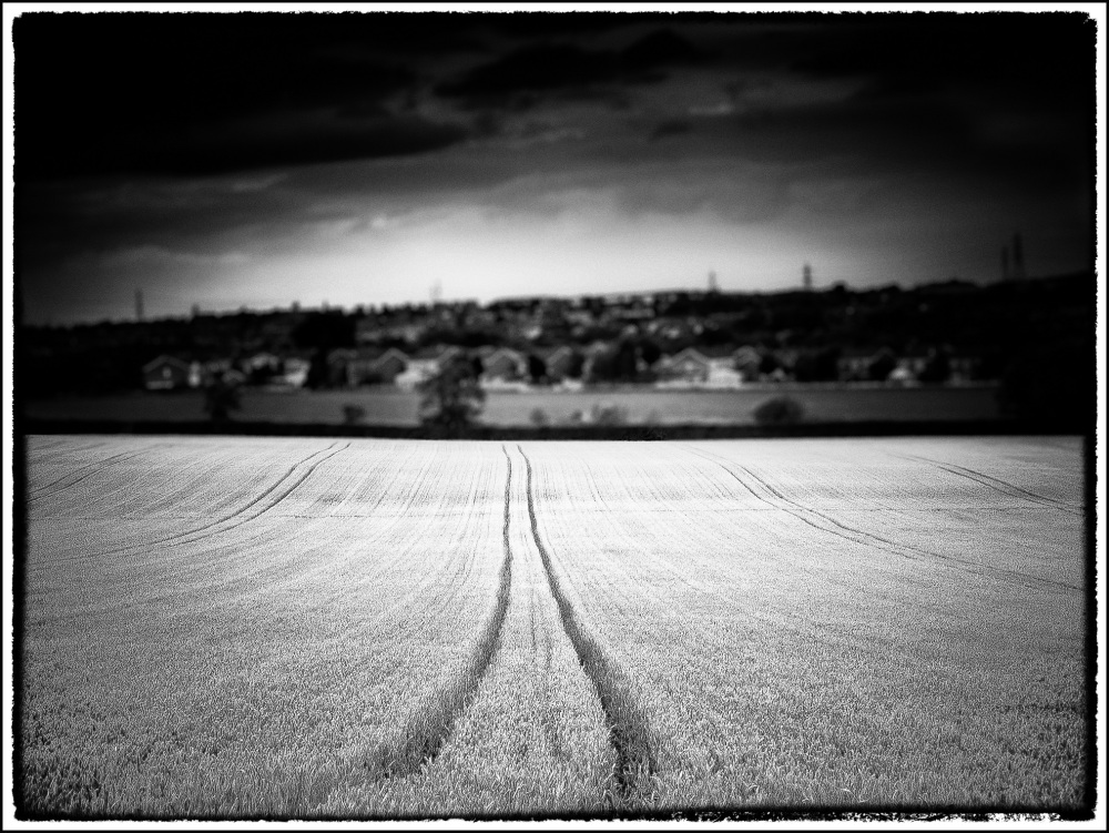 Tracks through a wheat field II
