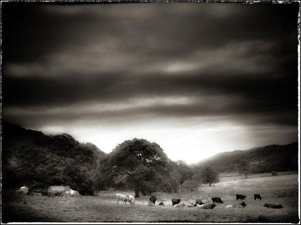 Scenes from a walk in Great Langdale #8