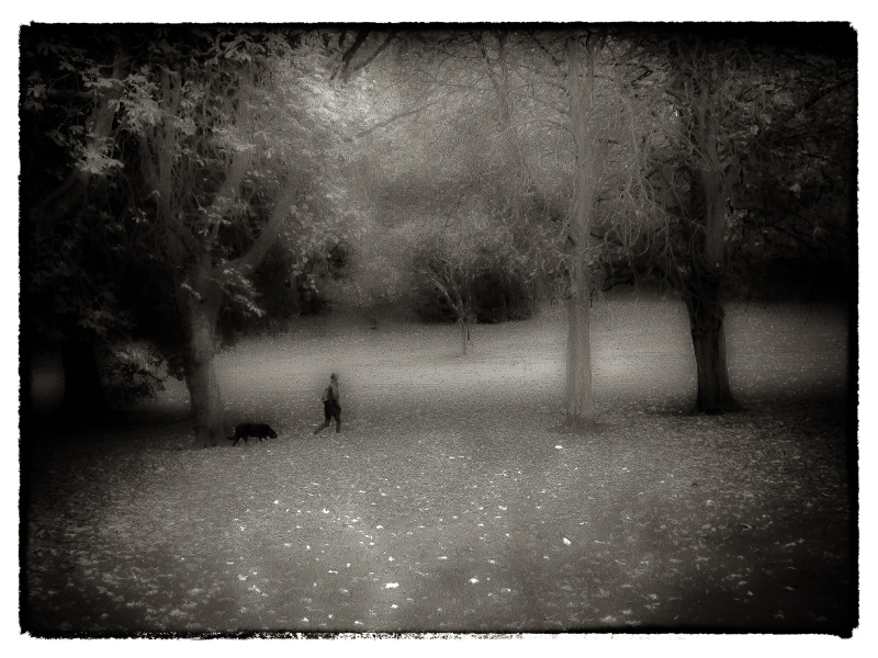 walking the dog 2